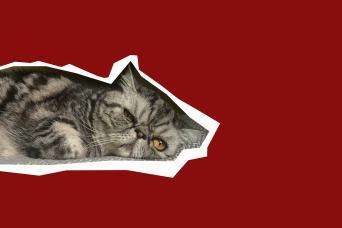 Unimpressed cat Mr Smoosh