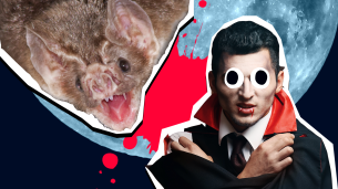 vampire bat facts thumbnail