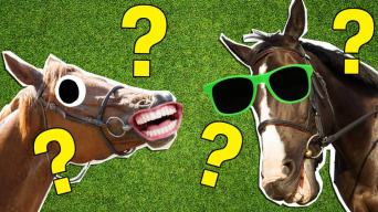 Ultimate horse quiz