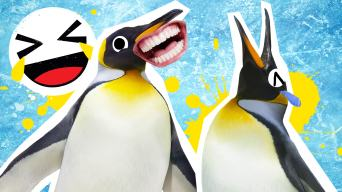 Penguin Jokes