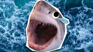 Shark Jokes