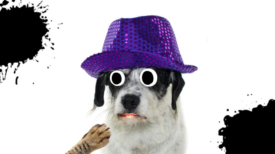 A dog in a hat