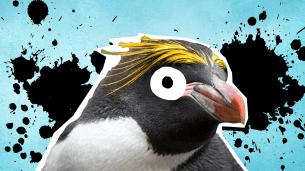 Penguin facts thumbnail