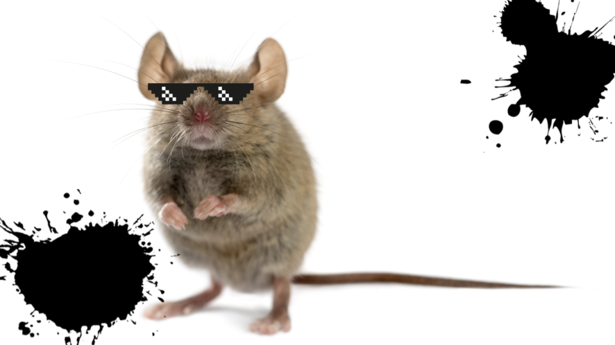 Mouse on white background