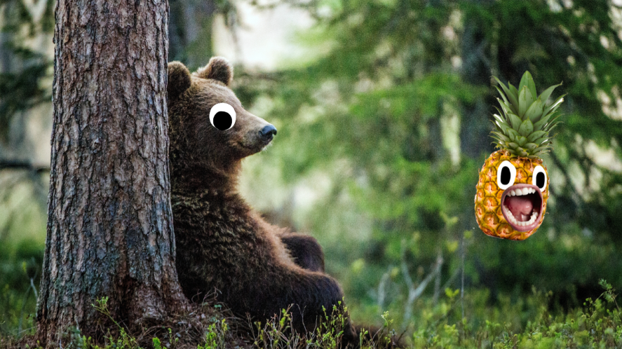 Bear next to tree in woods