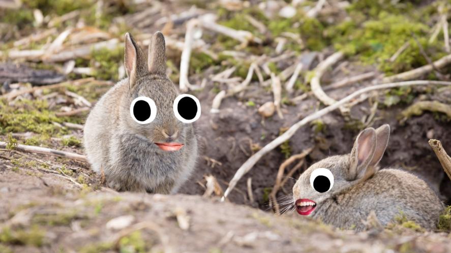 Two rabbits next to burrow