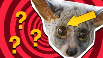 Animal Eyes Quiz