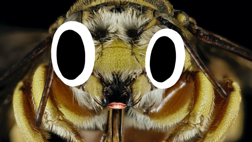 A long-horned bee