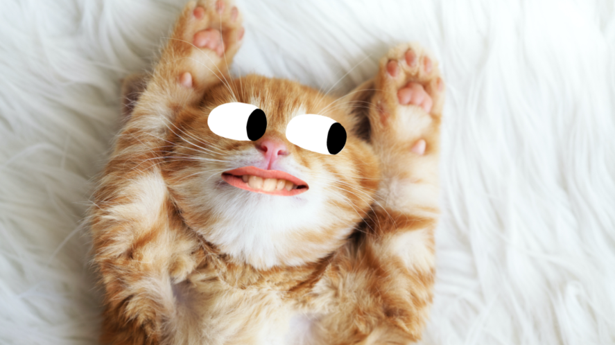 A cat ready for bed