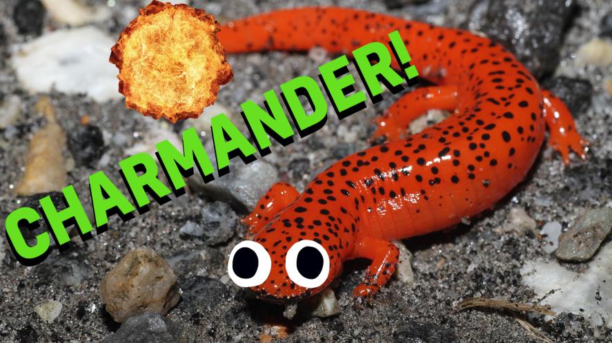 charmander thumbnail