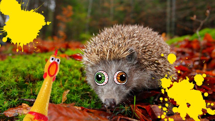 Headgehog on grass
