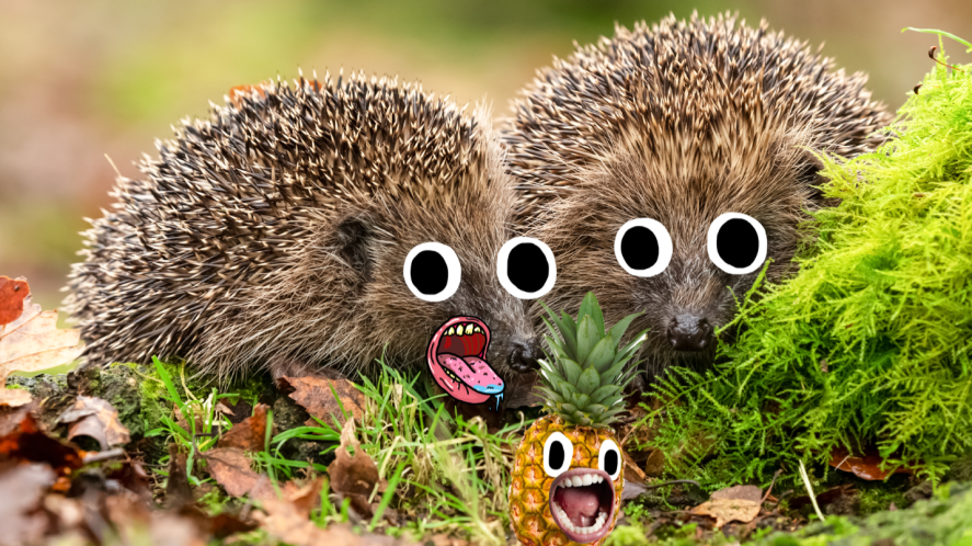 Two hedgehogs on woodland floor