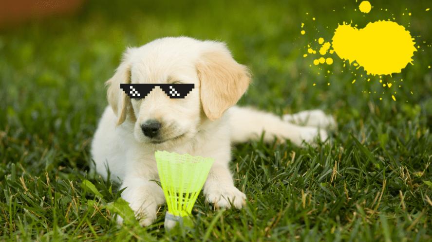 puppy with shuttlecockon grass