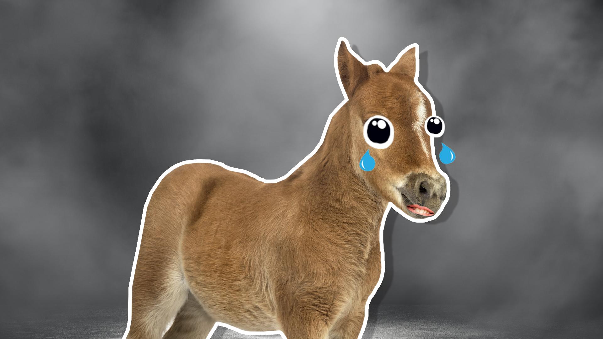 A sad pony