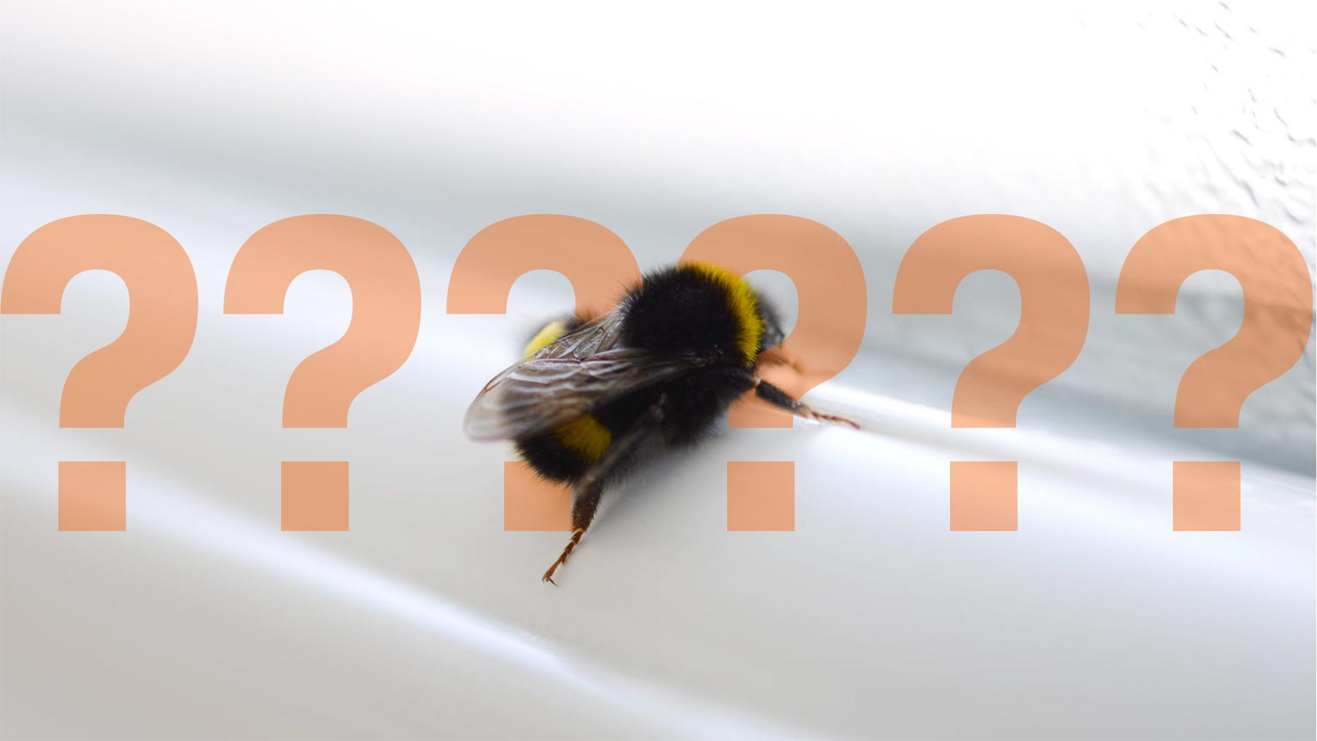 A bee on a windowsill