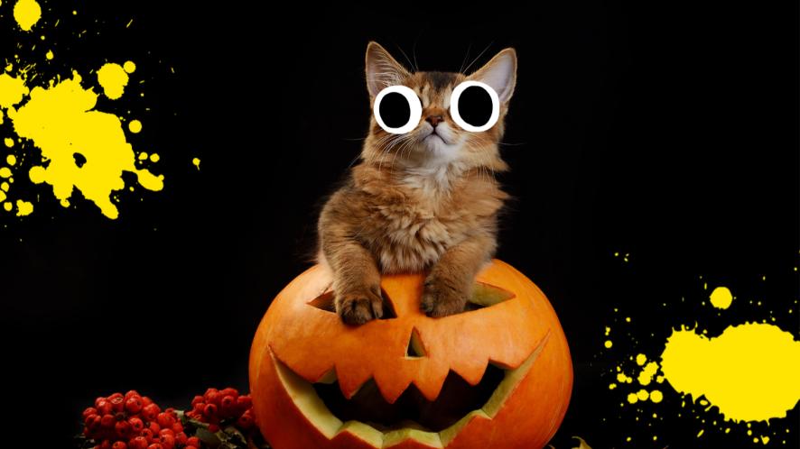 Kitten on pumpkin on black background