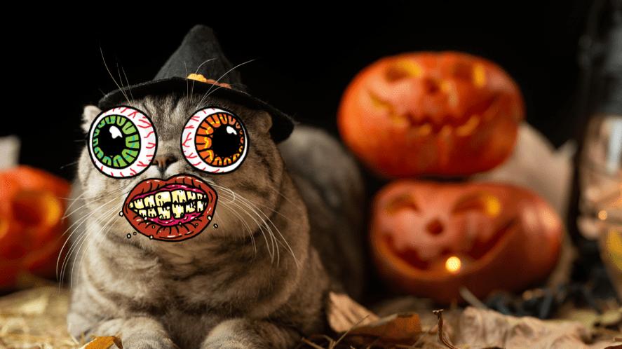 Cat in front of pumpkin