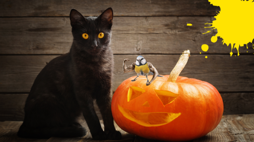 Black cat on wooden background with pumpkin