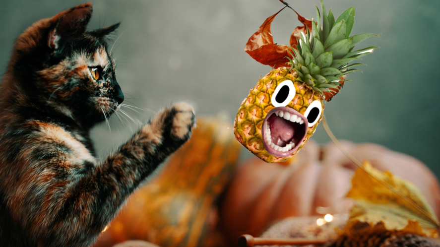 Cat batting at autumn leaves with screaming pineapple
