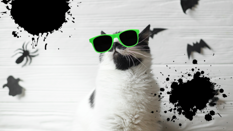 Cat with halloween decorations on black and white background