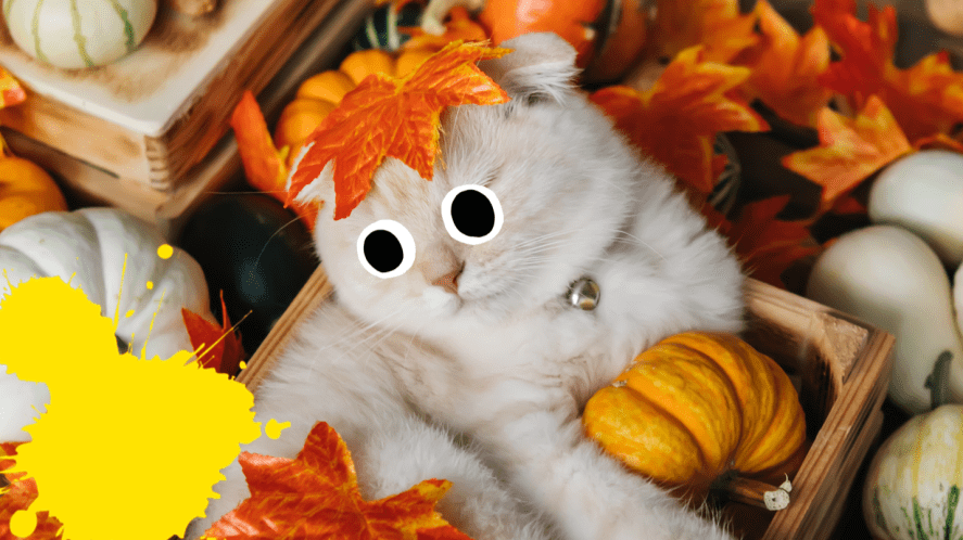 Cat surrounded by leaves and gourds