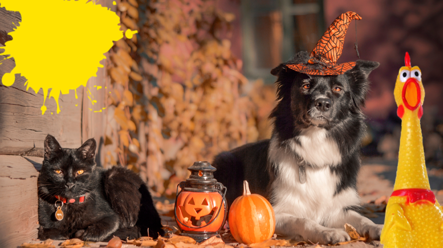 Cat and dog with Halloween decorations