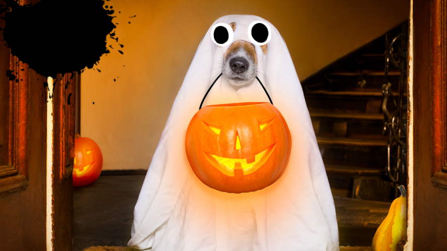 Dog in sheet with pumpkin in mouth