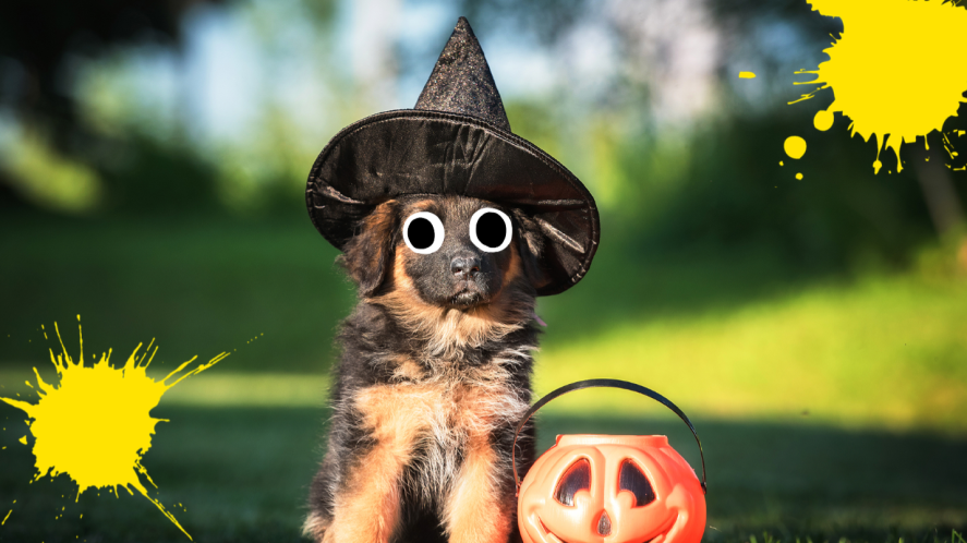 Dog in witches hat on grass with pumpkin bucket