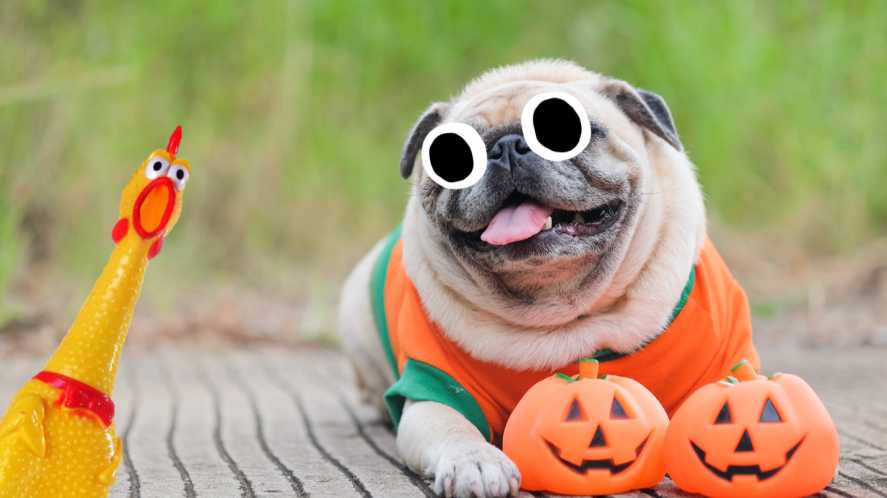 Pug with Halloween decorations on grass