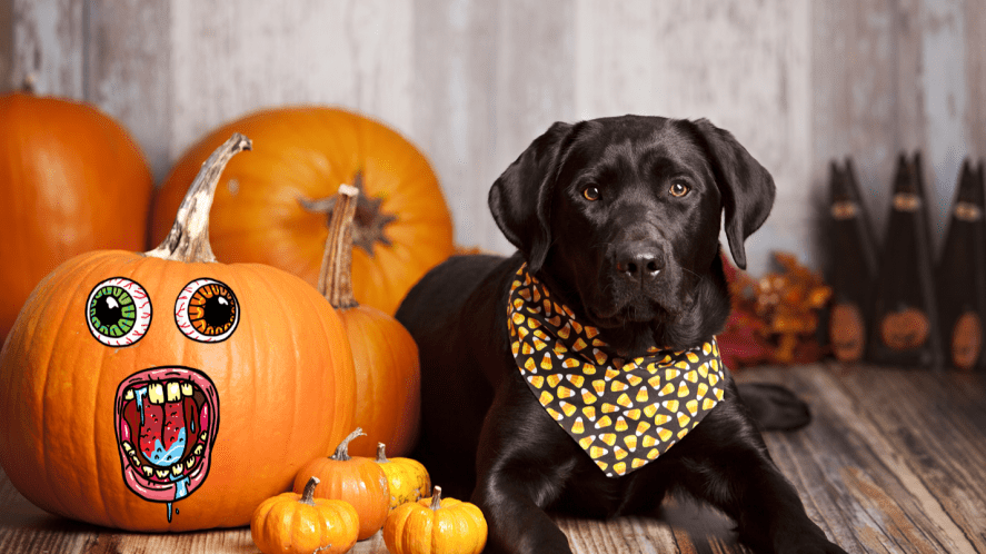 Dog with pumpkins in neckerchief