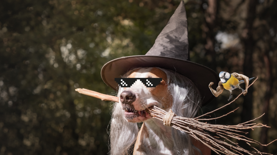 Dog in witch's hat with broom in mouth in front of trees