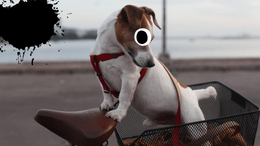 Dog in bicycle basket