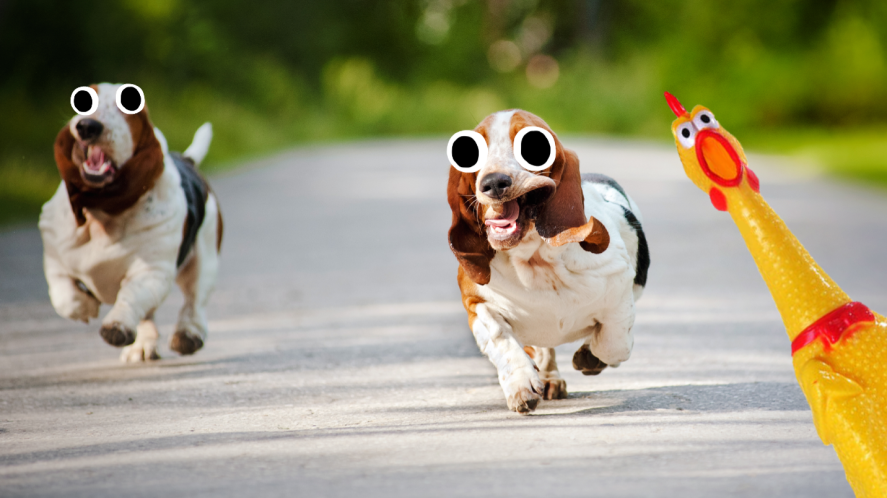 Two dogs running down a road
