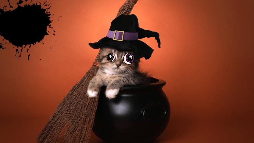 Kitten in cauldron with broom on orange background