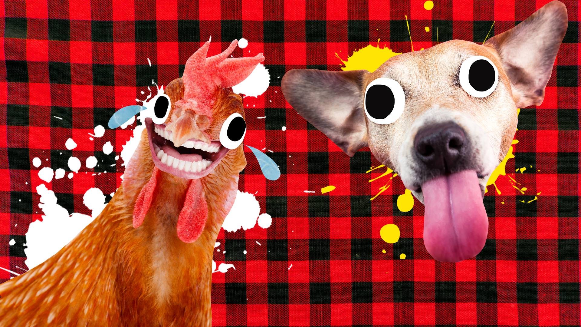 A laughing chicken and dog