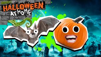 Spooky jokes thumbnail
