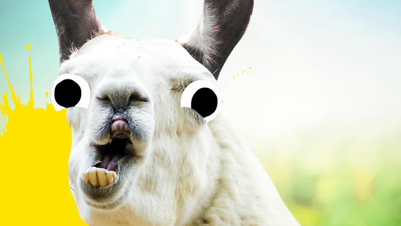White llama grinning