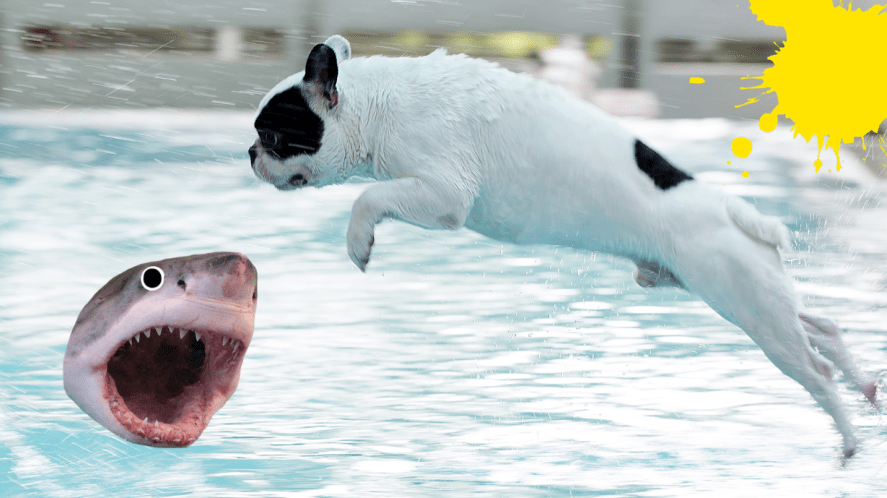 Dog diving into pool