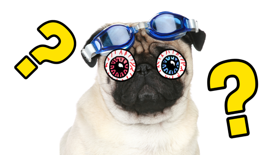 Pug in goggles in front of white background