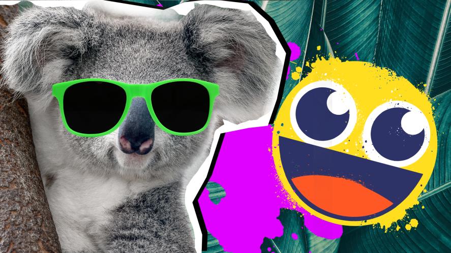 Koala Facts Thumbnail