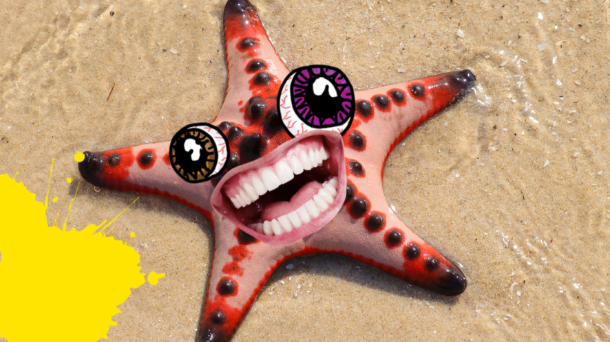 Starfish on beach with face