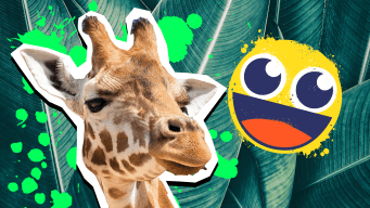 Giraffe facts thumbnail