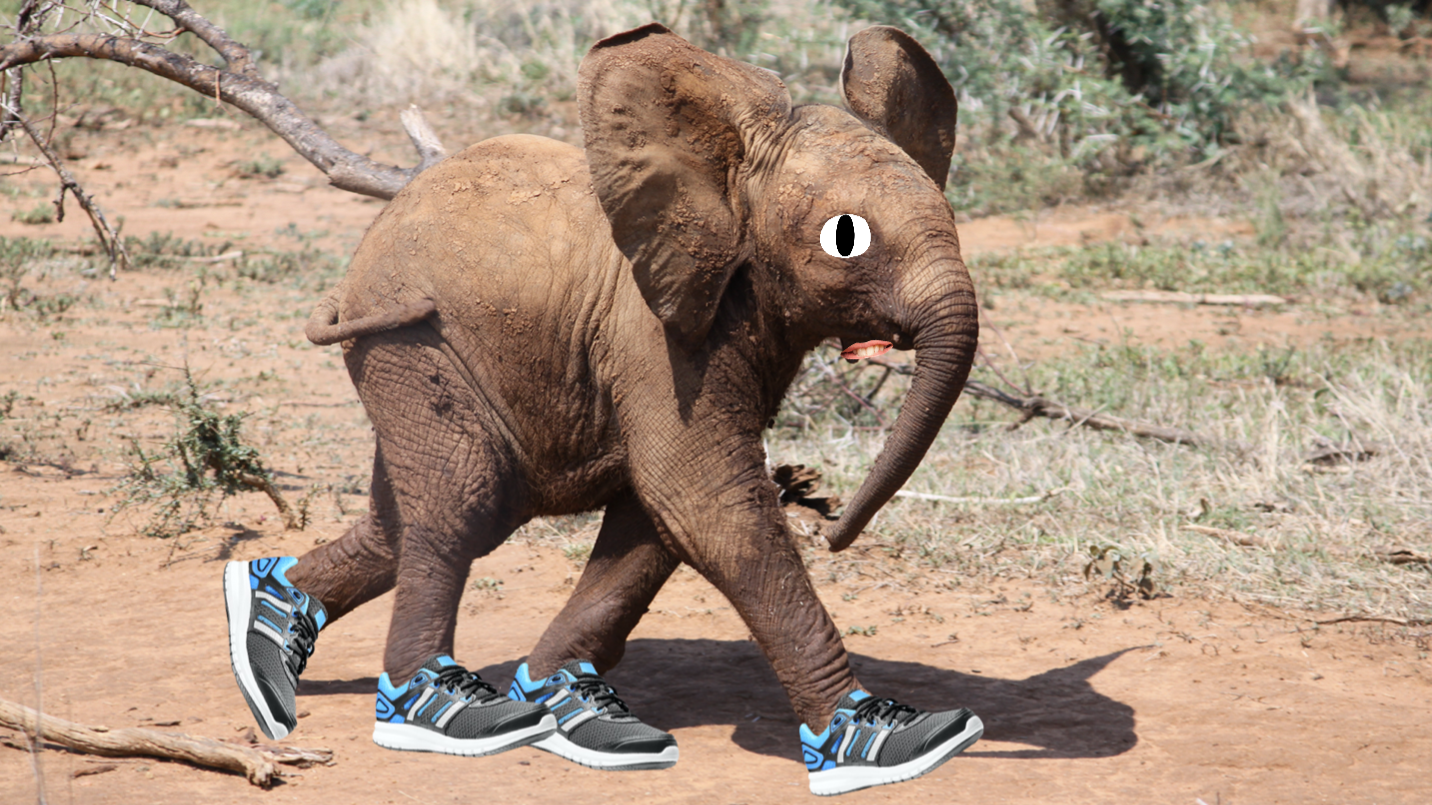 A small elephant wearing running shoes