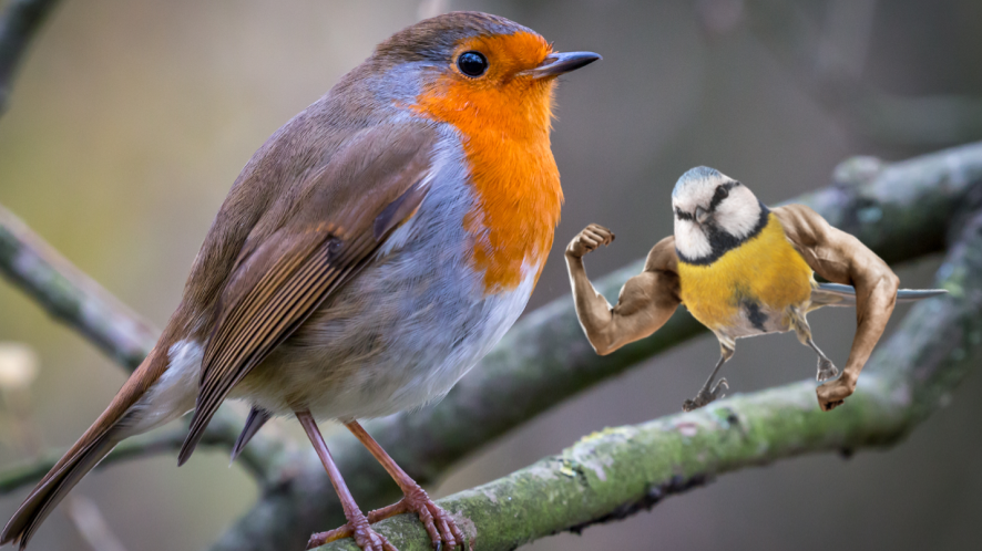 Robin on branch with Beano stickers