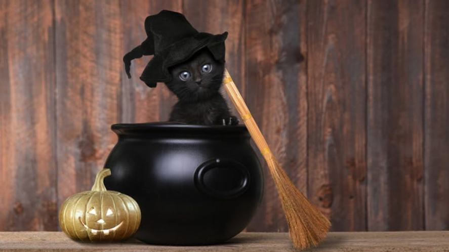 Cute black kitten with witches hat and broomstick