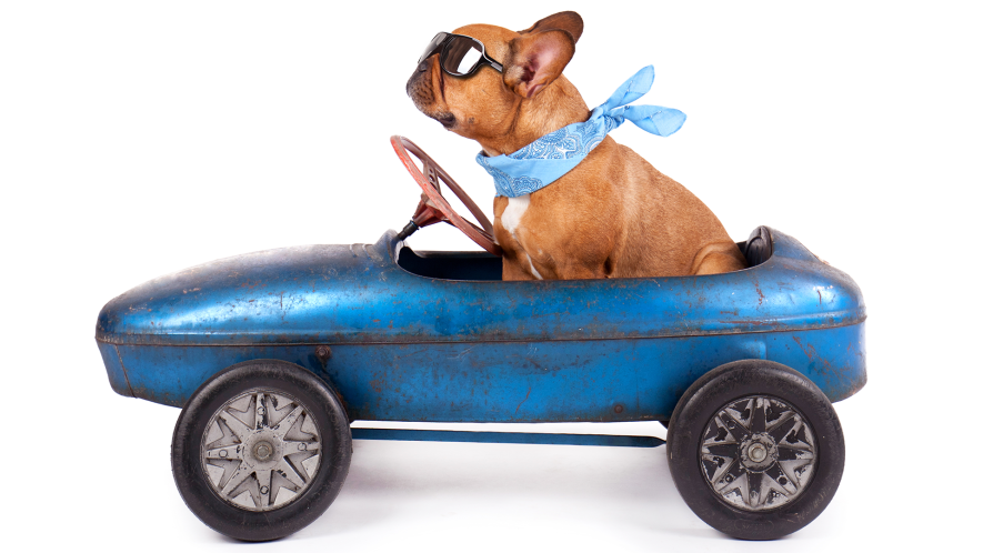 Funny dog in tiny little car