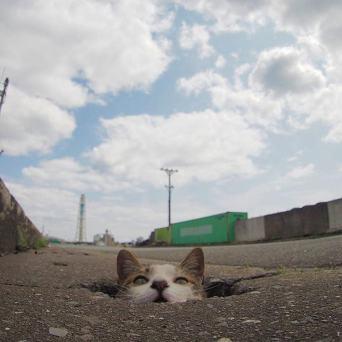 Cats love potholes!