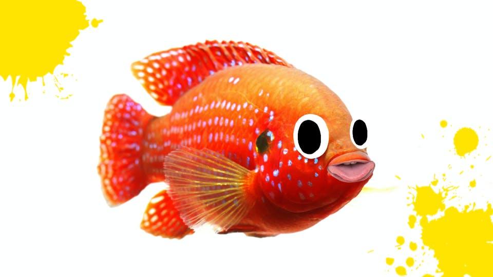 A fish poking its tongue out