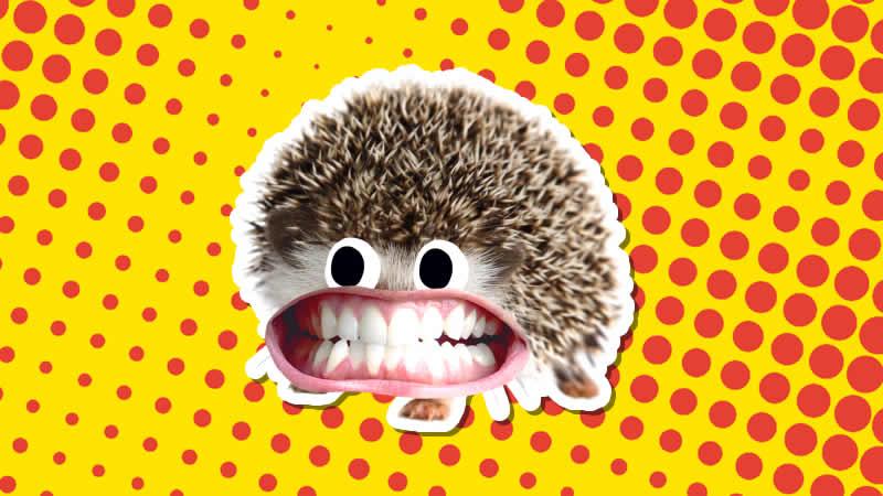 A smiling hedgehog