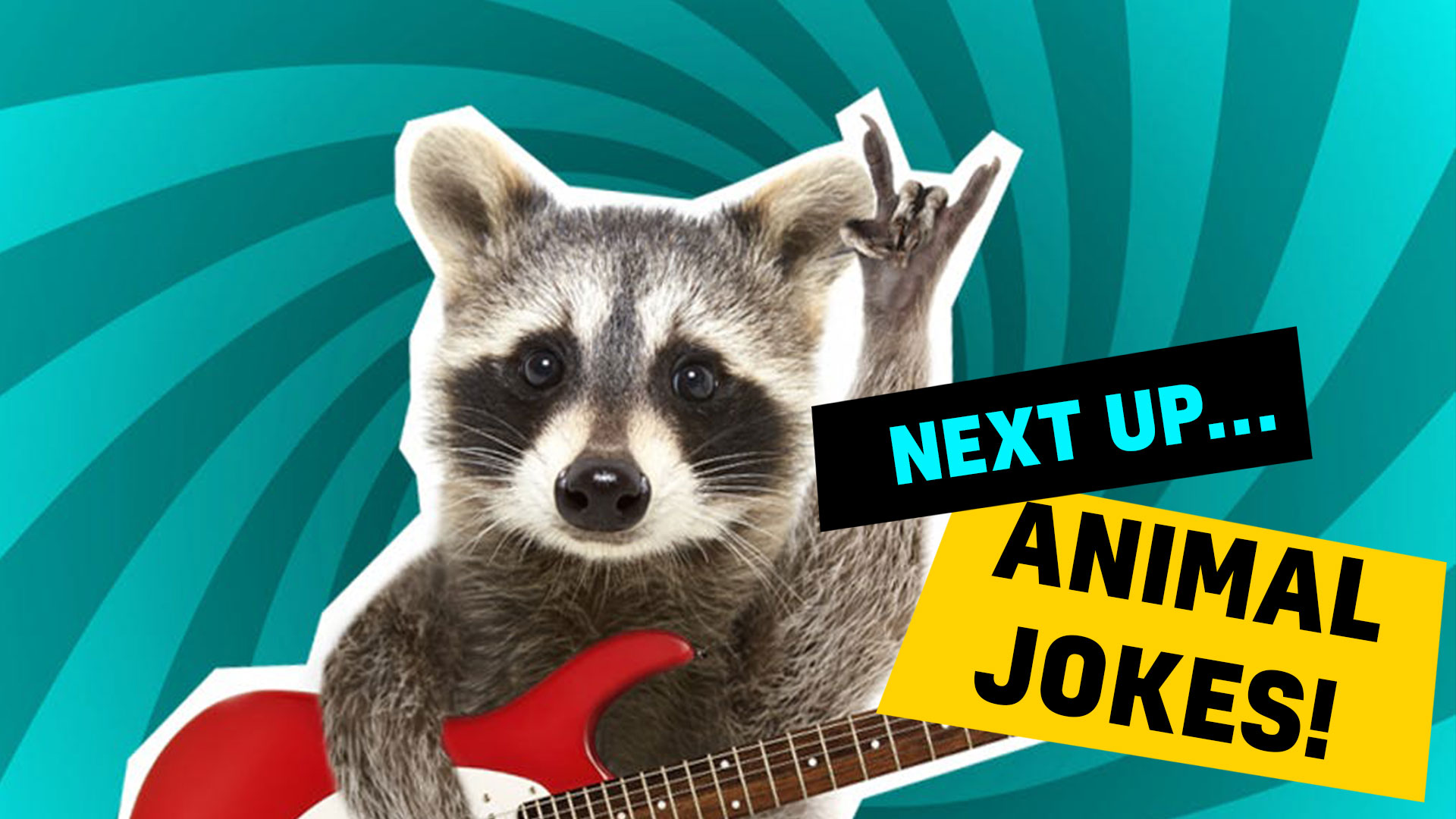 A racoon plays the guitar while you enjoy our animal jokes